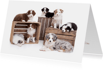 Zomaar een kaartje - Puppies