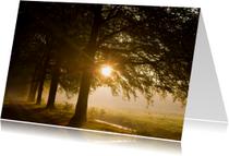 Zonlicht schijnt door pad met bomen