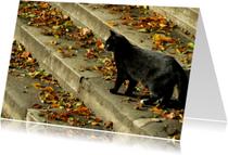 Zwarte kat met herfstbladeren