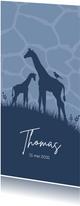 Geboorte - Giraffes met patroon