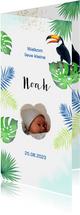 Geboorte toekanvobels botanisch
