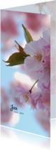 Rouwkaart bloesem zonnig
