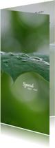 Rouwkaart dauwdruppels op bladeren