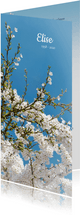 Rouwkaart lente bloesem