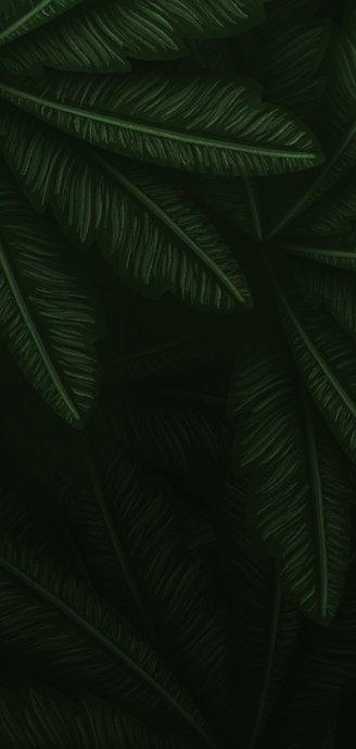 Geboortekaartje gouden silhouet panter met jungle bladeren Achterkant