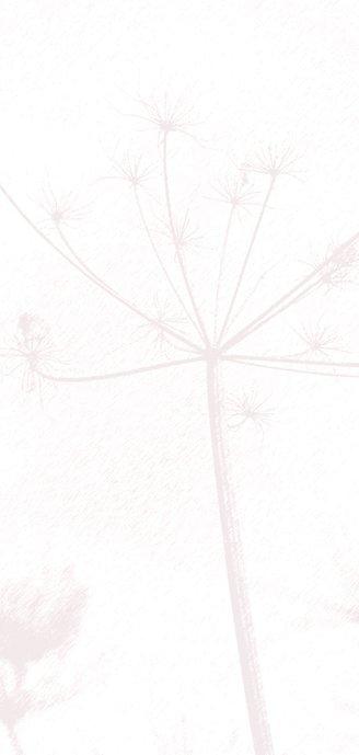 Rouwkaart met oud roze bloem silhouet 2