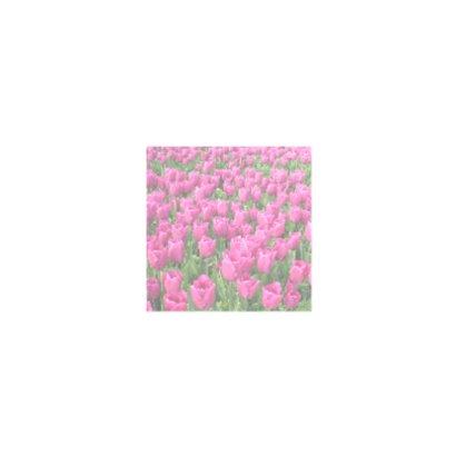 4K Roze Tulpen 2