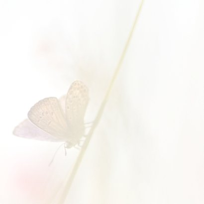 Bedankkaart vlinders-vierkant 2