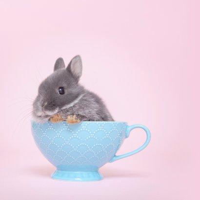Beterschap - Cup a Cuteness 2