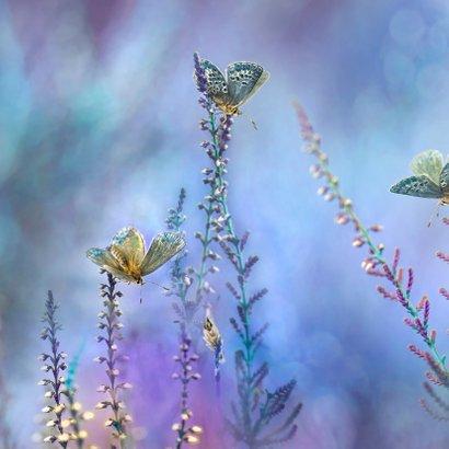 Blauwe vlinder-fantasie 2
