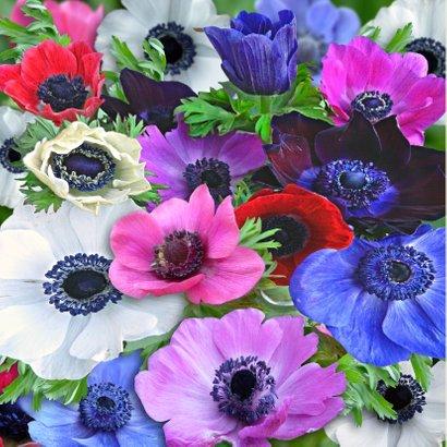 Bloemenkaart met kleurrijke Anemonen voor een vriendin 2