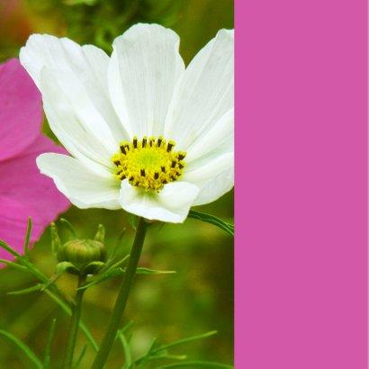 Bloemenkaart papaver 2