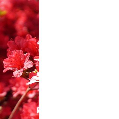 Bloemenkaart rode rhododendron 2