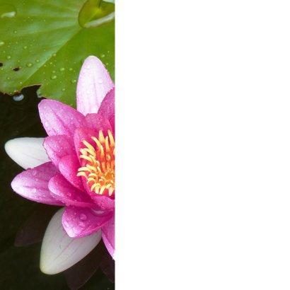 Bloemenkaart  roze waterlelie 2