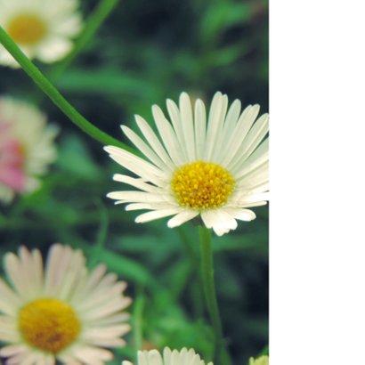 Bloemenkaart witte madeliefjes  2