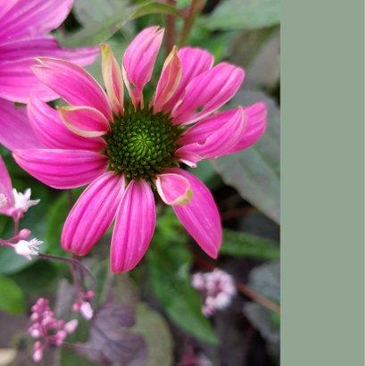 Bloemenkaart - Zonnehoed speciaal voor jou 2