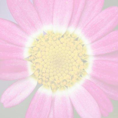 close up bloem 2