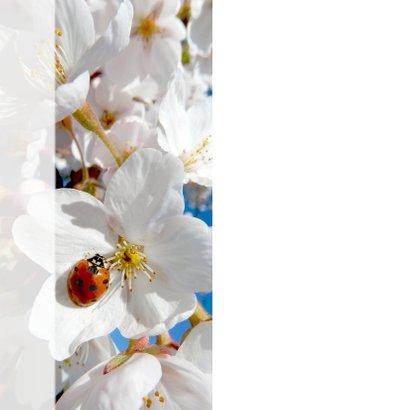 Coaching geluk lieveheerstbeest lente 2