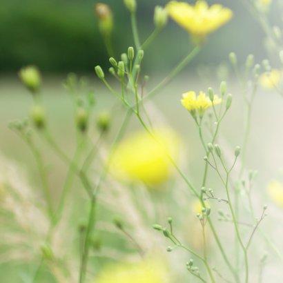 Condoleance - gele bloemen sterkte  2