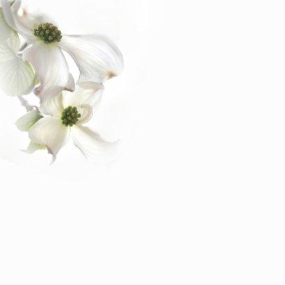 Condoleance met Cornusbloemen 2