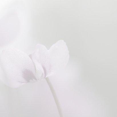 Condoleance met cyclaam 3