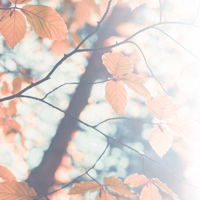 Condoleance - met oprechte deelneming herfst 2