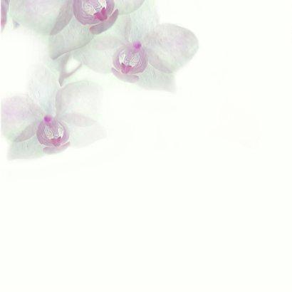 Condoleance met orchidee-paars- 3