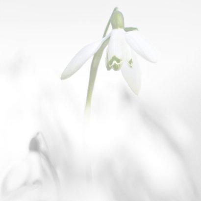 Condoleance sneeuwklokjes  3