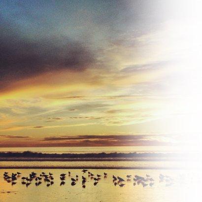 Condoleance - strand vogels stil 2