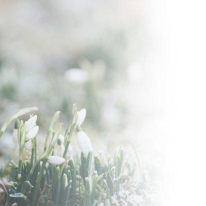 Condoleance - veel sterkte met sneeuwklokje  2