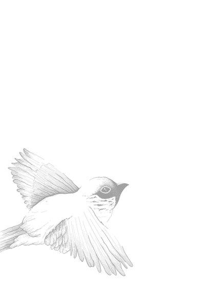 Condoleance  - vogel er is niets wat voorgoed verdwijnt 2