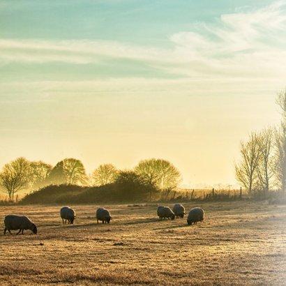 Condoleance - winters landschap schapen 2