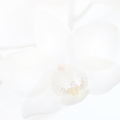 Condoleance witte orchidee 2