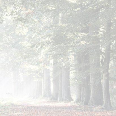 Condoleance zonnestralen in herfstbos 3