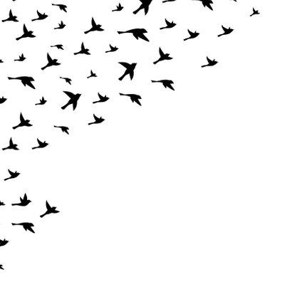 Condoleancekaart 'Met oprechte deelneming' vogels 2