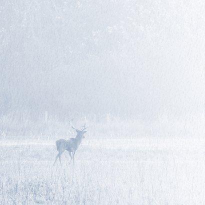 Condoleancekaart natuur met damhert 2