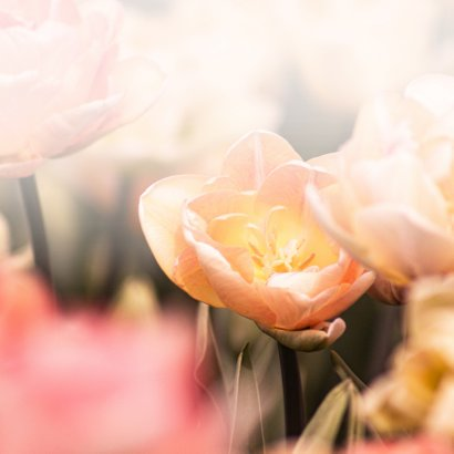 Condoleancekaart tulpen met oprechte deelneming 2