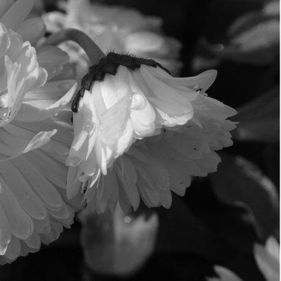 Condoleancekaart witte bloem dauwdruppels - SK 2