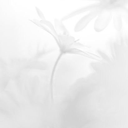 Condoleren met anemonen 2