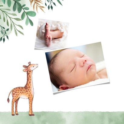Danksagung Geburt Giraffen und Blätter Fotos innen 2