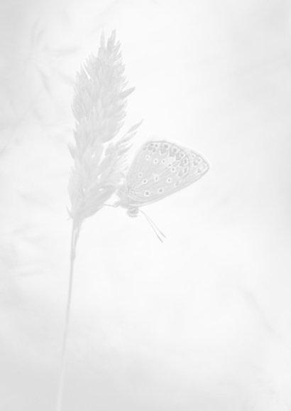 Deelneming grassen en vlinder 2