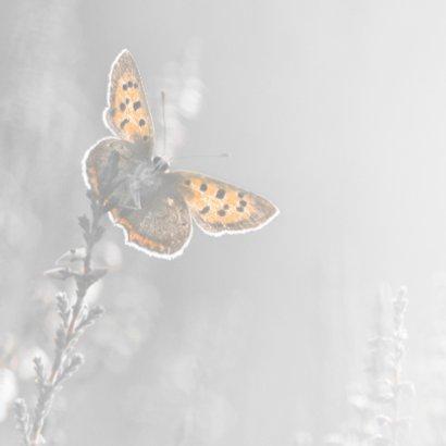 Deelneming met vlinder 2