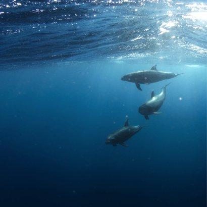Dierenkaart  dolfijn verjaardag 2