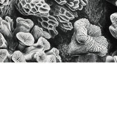Einladungskarte 'yes we do' Foto und Unterwasserwelt Rückseite