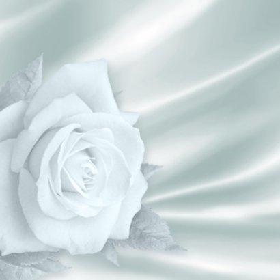 Felicitatie met roos, kanten hart en ringen op wit 2