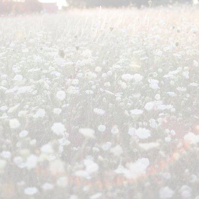 fragiele veldbloem 3