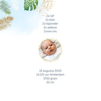 Geboorte leeuwtje jongen 2