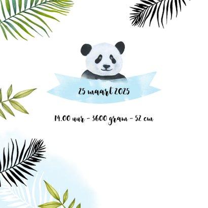 Geboorte pandabeertje tropisch 2