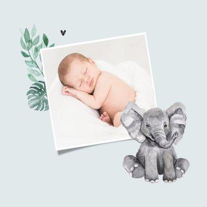 Geboortekaartje jongen olifantjes patroon botanisch 2