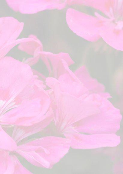 geraniums 3